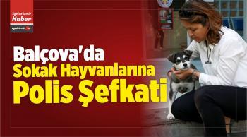 Sokak Hayvanlarına Polis Şefkati
