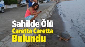 İzmir'in Aliağa Sahilinde ÖlüCaretta Caretta Bulundu