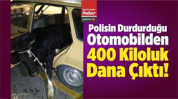 Polisin Durdurduğu Otomobilden 400 Kiloluk Dana Çıktı