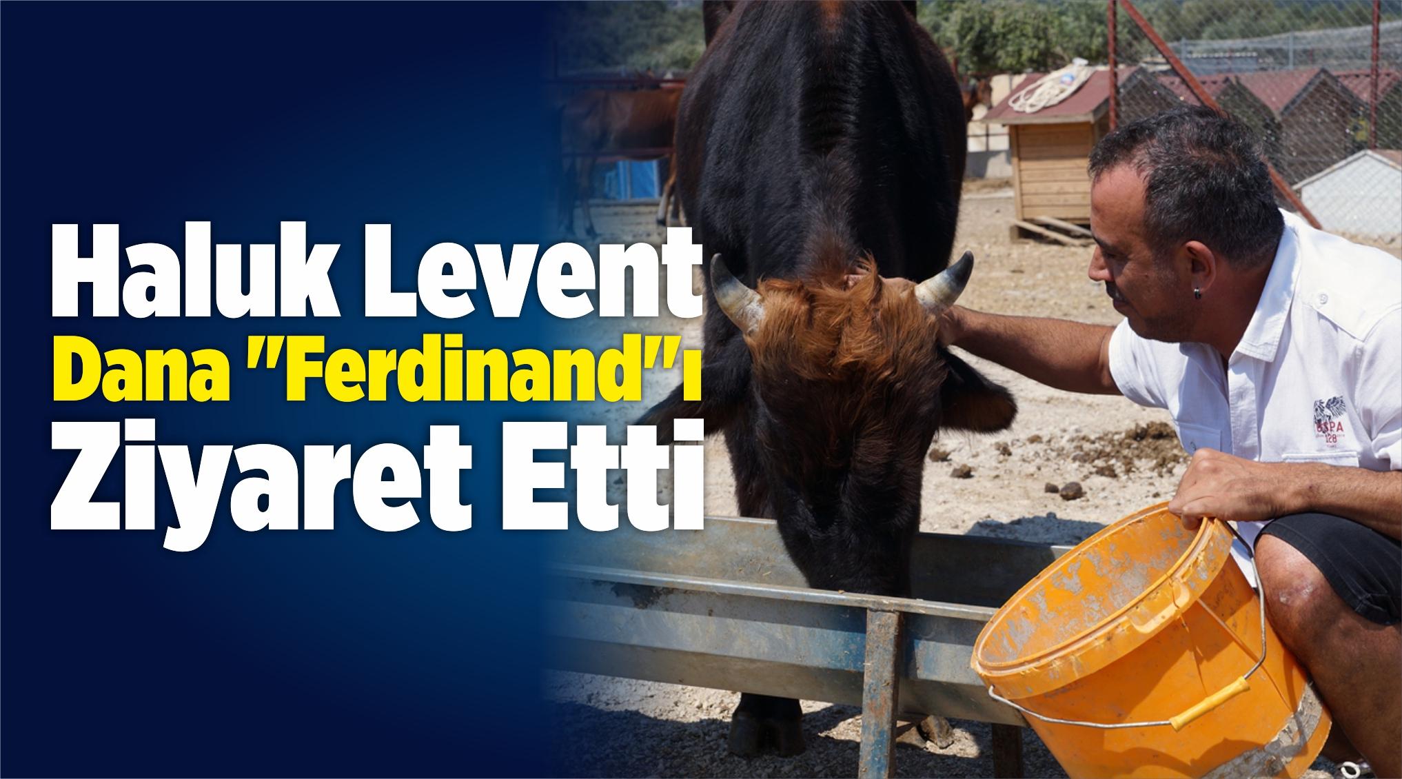"""Sanatçı Haluk Levent Dana """"Ferdinand""""ı Ziyaret Etti"""