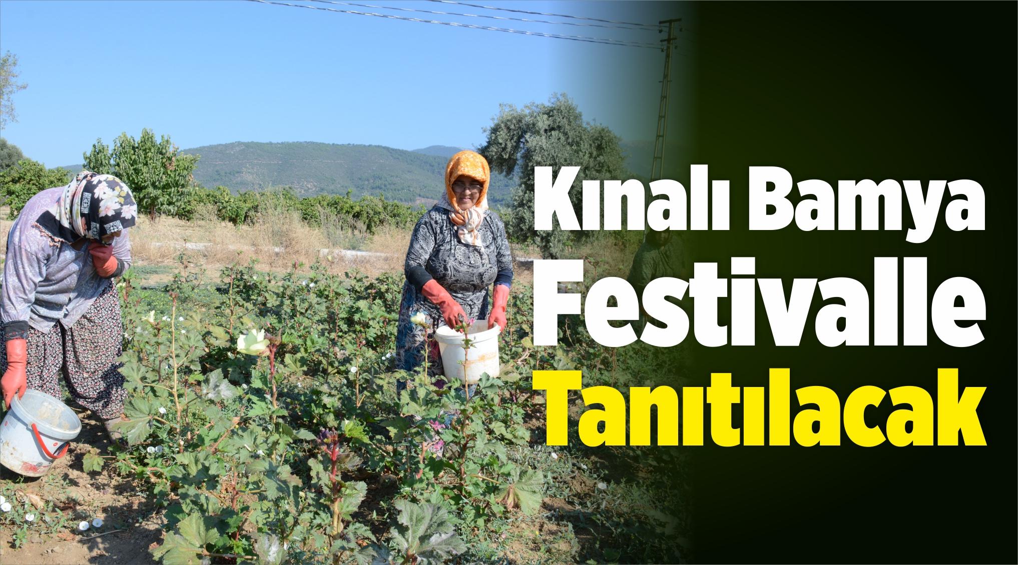 Kınalı Bamya Festivalle Tanıtılacak