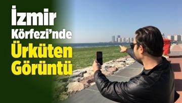 İzmir Körfezi'ndeki Görüntü Şaşkınlığa ve Korkuya Sebep Oldu