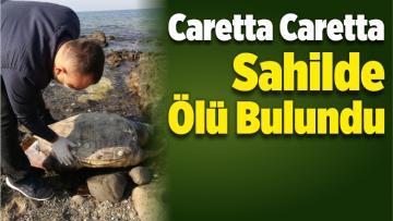 Aliağa'da Caretta Caretta Sahilde Ölü Bulundu