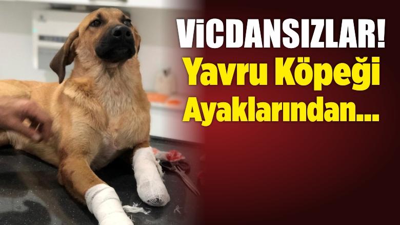 İzmir'de Yavru Köpeği Bacaklarından Vurdular