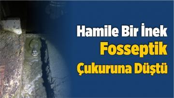 İzmir'de Çukura Düşen İneğe İki Saatlik Operasyon