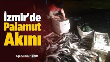 İzmir'de Palamut Akını