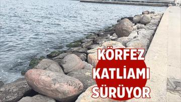 Büyükşehir'in, Körfez Katliamı Sürüyor