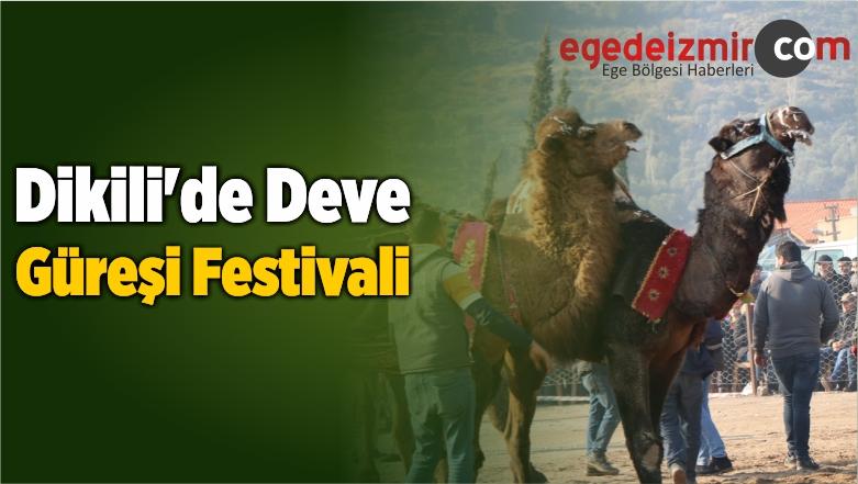 Dikili'de Deve Güreşi Festivali