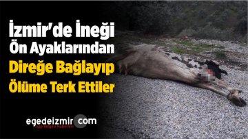 İzmir'de İneği Ön Ayaklarından Direğe Bağlayıp Ölüme Terk Ettiler