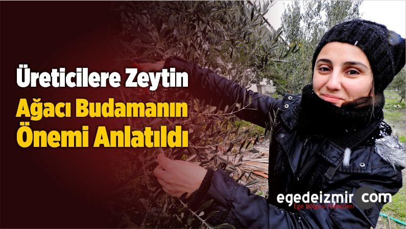 Üreticilere Zeytin Ağacı Budamanın Önemi Anlatıldı