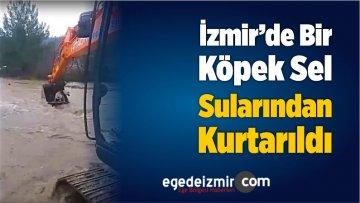İzmir'de Bir köpek Sel Sularından Kurtarıldı
