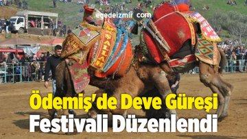 Ödemiş'de Deve Güreşi Festivali Düzenlendi