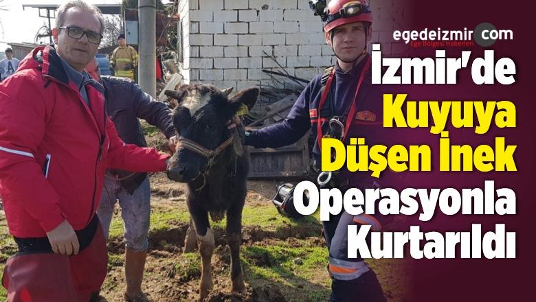 İzmir'de Kuyuya Düşen İnek Operasyonla Kurtarıldı