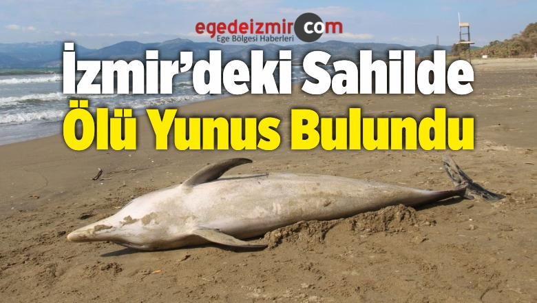 Selçuk İlçesindeki Sahilde Ölü Yunus Bulundu