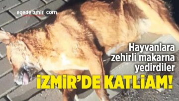 İzmir'de 3 Sokak Köpeği Telef Oldu
