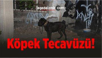 Köpek Tecavüzü! Zavallı Hayvanı Ormanlık Alana Götürüp…