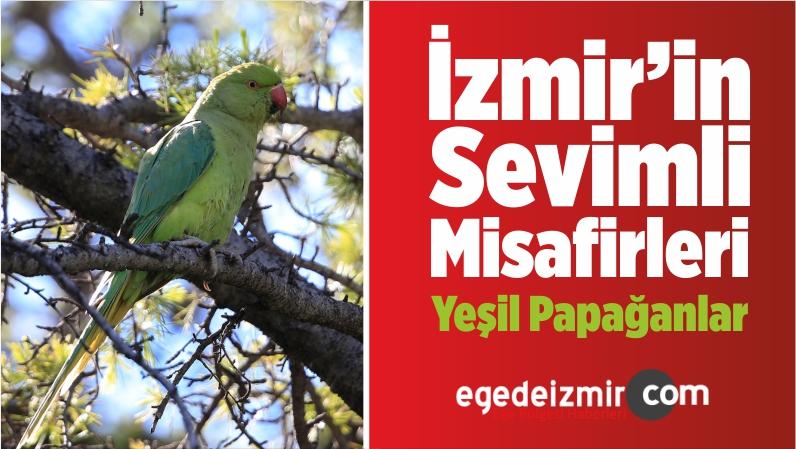 İzmir'in Sevimli Misafirleri Yeşil Papağanlar