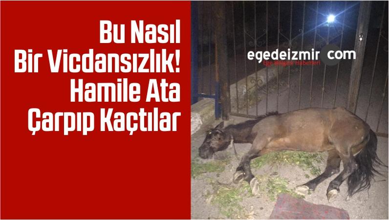 İzmir'de Vicdansızlık Hamile Ata Çarpıp Kaçtılar