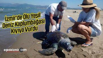 İzmir'de Ölü Yeşil Deniz Kaplumbağası Kıyıya Vurdu