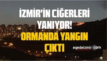 İzmir Karşıyaka'da Orman Yangını