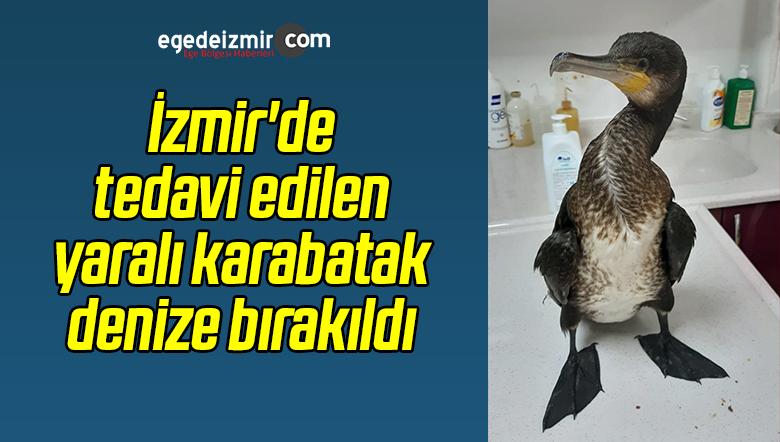 Yaralı Bulunan Karabatak Tedavisinin Ardından Denize Bırakıldı