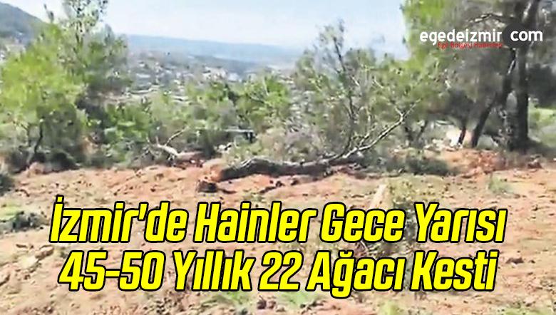 İzmir'de Hainler Gece Yarısı 45-50 Yıllık 22 Ağacı Kesti
