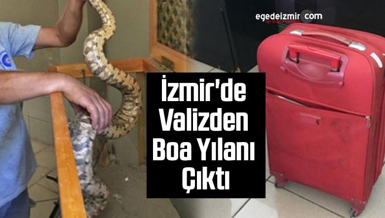 İzmir'de Valizden Boa Yılanı Çıktı