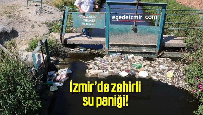 İzmir'de Kanallardaki Balık Ölümleri Büyük Korku Yarattı