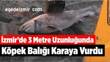 İzmir'de 3 Metre Uzunluğunda Köpek Balığı Karaya Vurdu