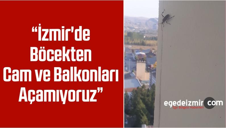 """""""İzmir'de Böcekten Cam ve Balkonları Açamıyoruz"""""""