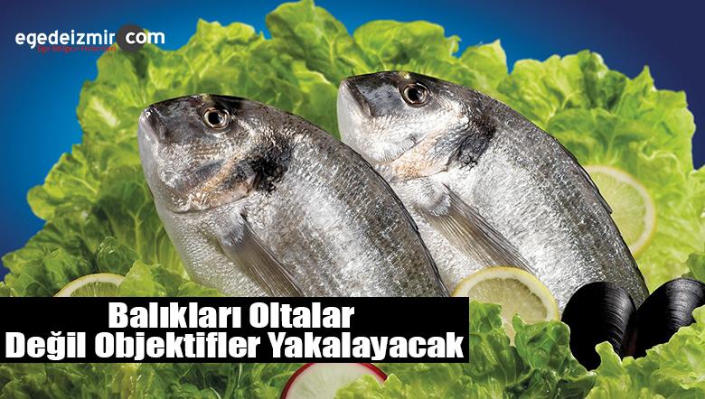 Artık Balıkları Oltalar Değil Objektifler Yakalayacak