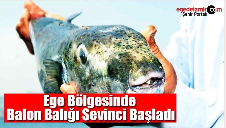 Akdeniz Ve Ege Bölgesinde Balon Balığı Sevinci Başladı