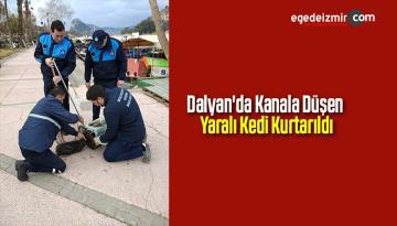 Dalyan'da Kanala Düşen Yaralı Kedi Kurtarıldı