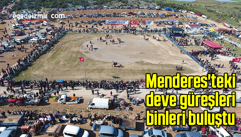 Menderes'teki deve güreşleri binleri buluştu
