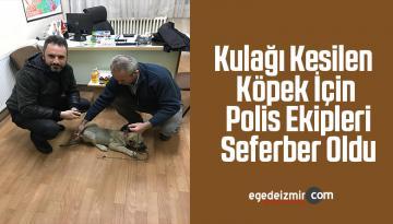 Kulağı Kesilen Köpek İçin Polis Ekipleri Seferber Oldu