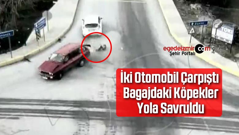 İki Otomobil Çarpıştı Bagajdaki Köpekler Yola Savruldu