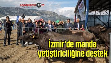 İzmir'de manda yetiştiriciliğine destek
