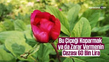Bu Çiçeği Koparmak ya da Zarar Vermenin Cezası 60 Bin Lira