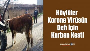 Köylüler Korona Virüsün Defi İçin Kurban Kesti