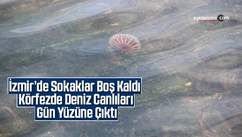 İzmir'de sokaklar boş kaldı, körfezde deniz canlıları gün yüzüne çıktı