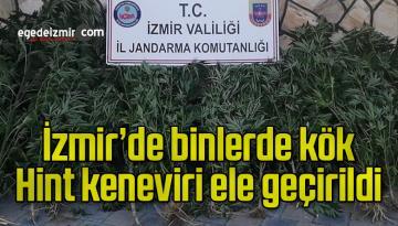 İzmir'de binlerde kök Hint keneviri ele geçirildi