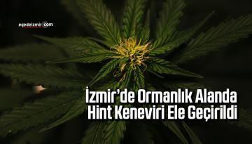 İzmir'de Ormanlık Alanda Hint Keneviri Ele Geçirildi