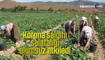 Korona salgını salatalığı olumsuz etkiledi