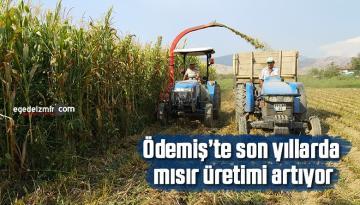 Ödemiş'te son yıllarda mısır üretimi artıyor
