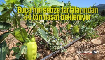 Buca'nın sebze tarlalarından 54 ton hasat bekleniyor