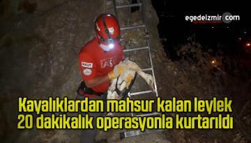 Kayalıklardan mahsur kalan leylek 20 dakikalık operasyonla kurtarıldı