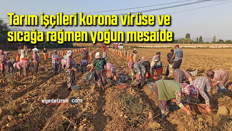 Tarım işçileri korona virüse ve sıcağa rağmen yoğun mesaide