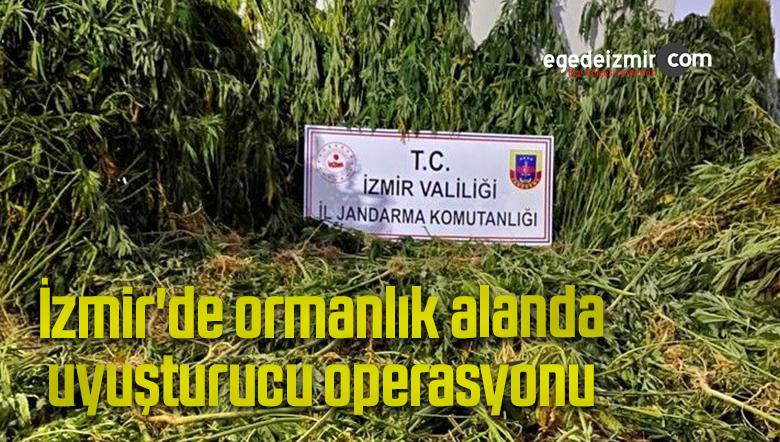 İzmir'de ormanlık alanda uyuşturucu operasyonu