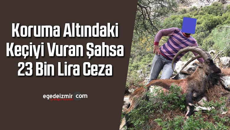 Koruma altındaki keçiyi vuran şahsa 23 bin lira ceza
