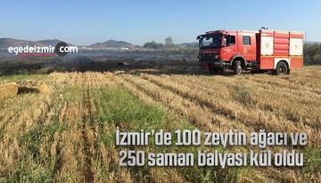 İzmir'de 100 zeytin ağacı ve 250 saman balyası kül oldu